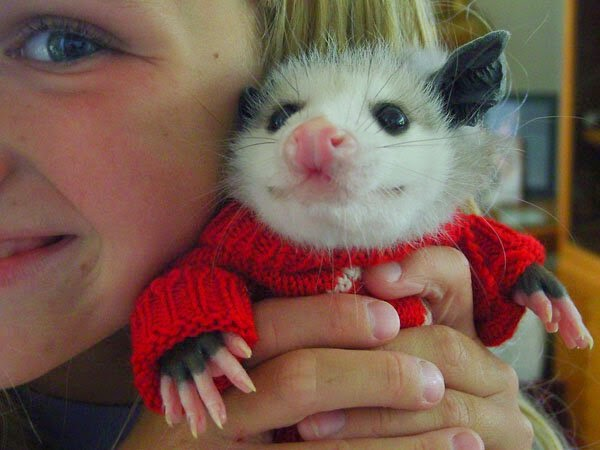 Funny animals pictures, animal photos