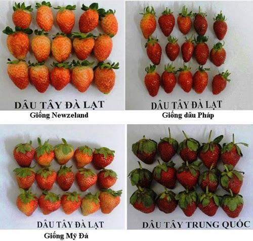 So sánh hình dạng các giống dâu tây Đà Lạt với dâu Trung Quốc