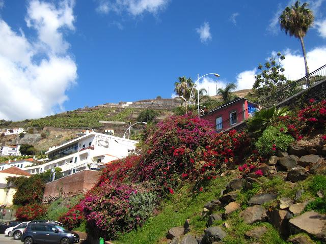 Madeira Câmara de Lobos
