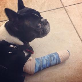 """Aww, Dilla Hurt His Paw"""