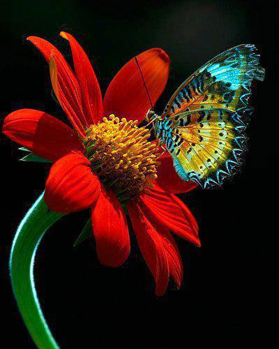 """""""Dificuldade"""" é o nome de uma ferramenta criada para nos ajudar a definir quem somos.  Paulo Coelho"""