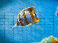 Butterfly fish Puzzle