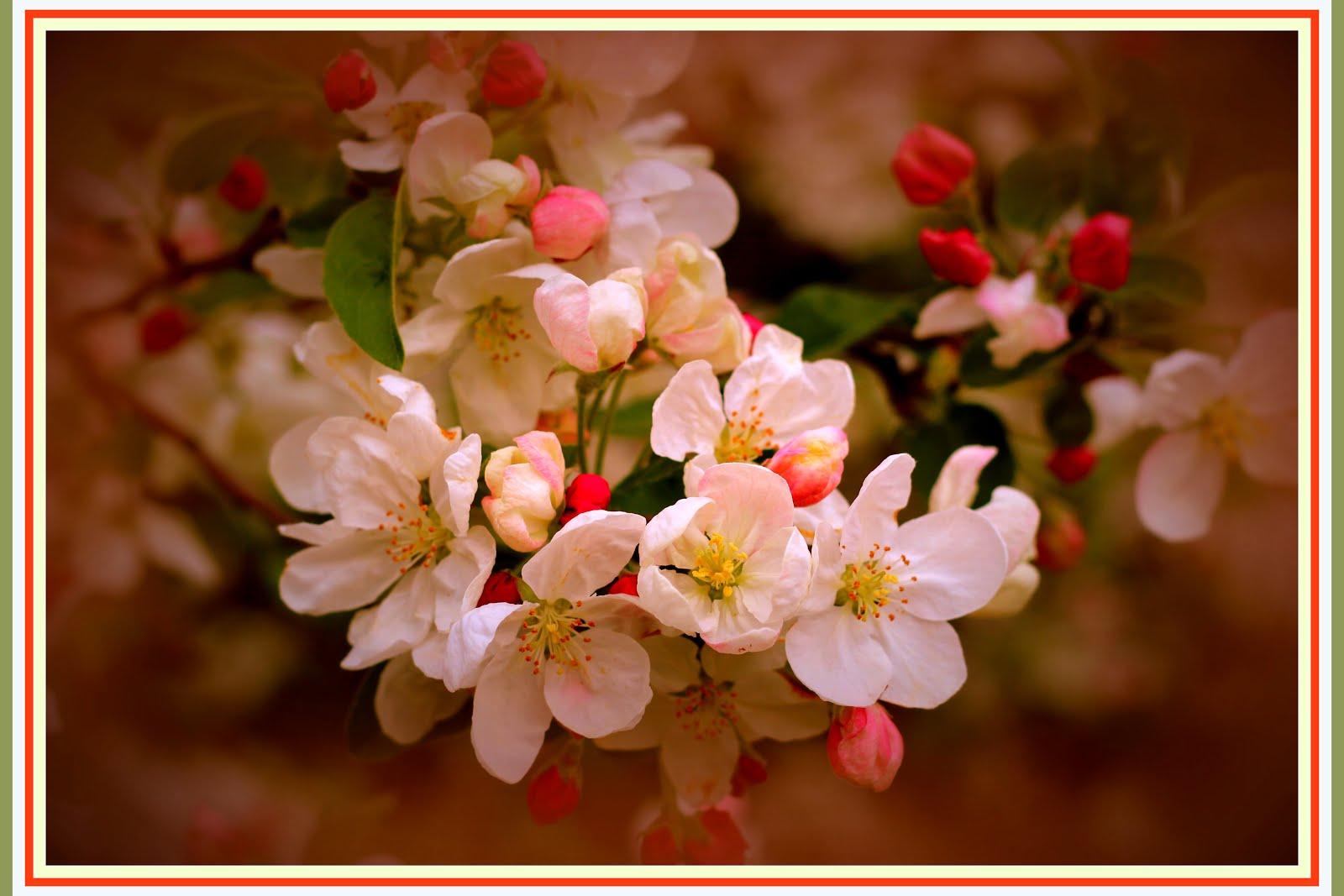 Un arbuste charmeur