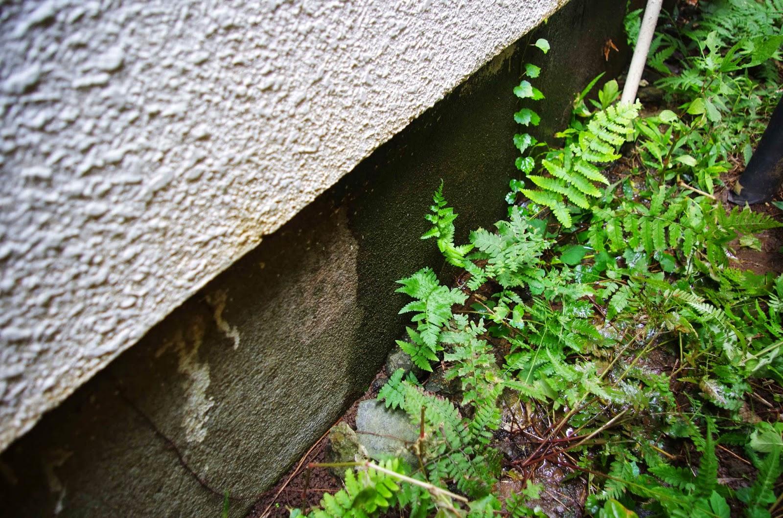 戸建住宅の漏水