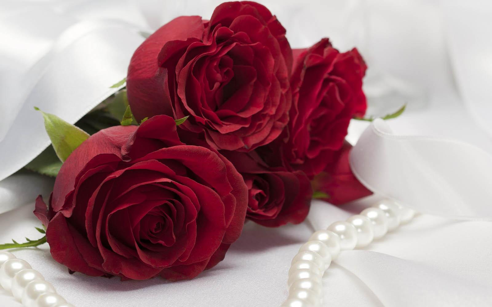 red rose desktop background - photo #17
