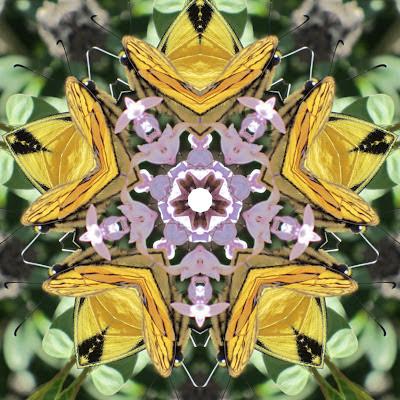 butterflyingarden.jpg