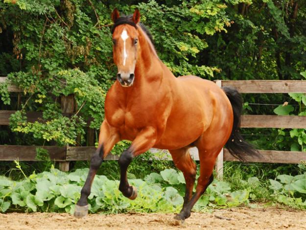 Cavalo Quarto De Milha I Love Cavalos ~ Wallpaper Cavalos Quarto De Milha