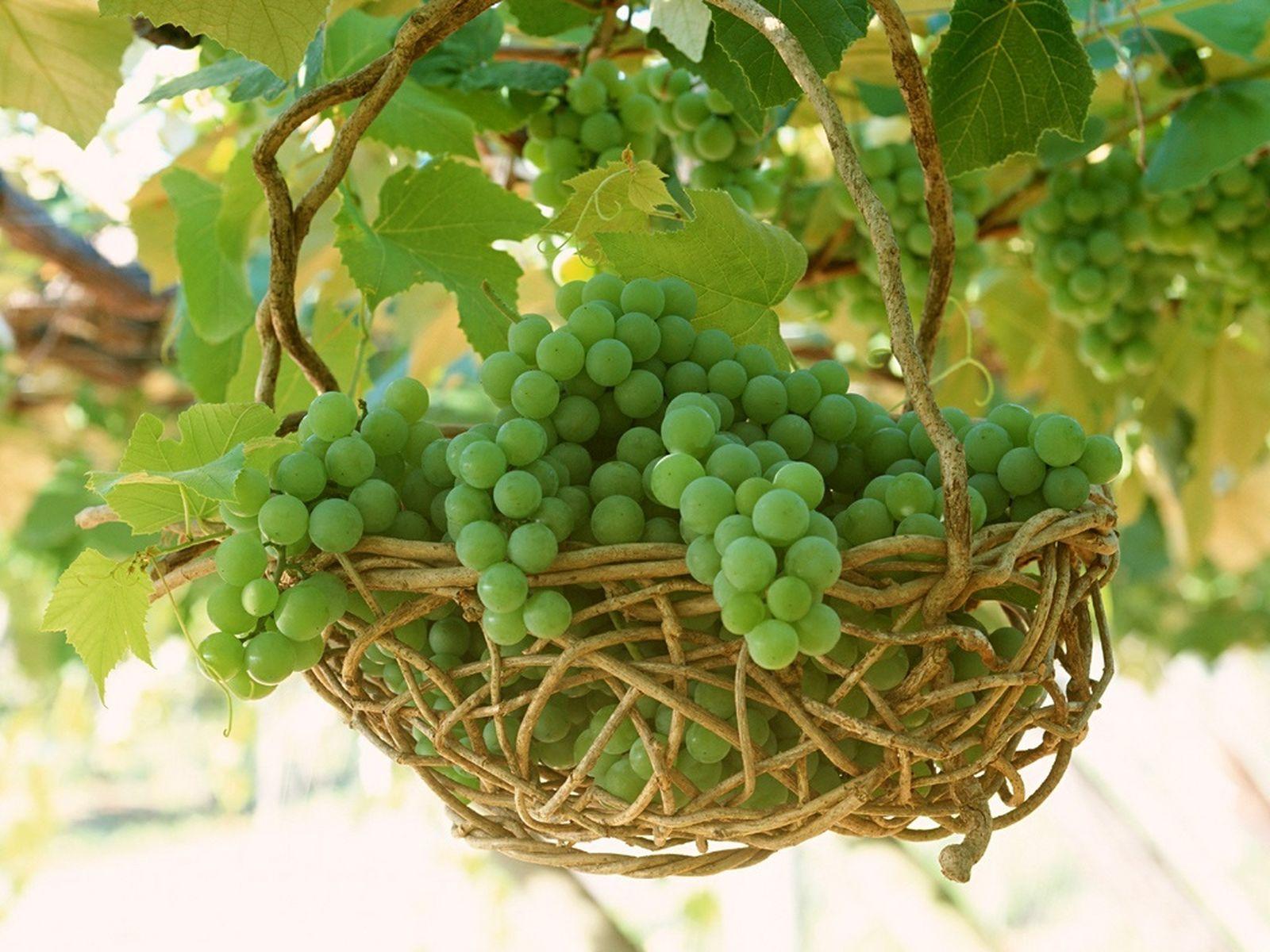 http://2.bp.blogspot.com/-QjQ3v9s-0oE/T7j7i_bbmcI/AAAAAAAAJVM/1Xu61rWMa38/s1600/Fruits_Wallpapers__09.jpg