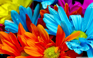 Colorful Flowers HD Wallpaer