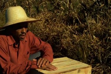 O Plantador de Quiabos