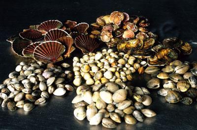 pescados mijesan tipos de almejas