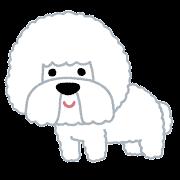 ビション・フリーゼのイラスト(犬)