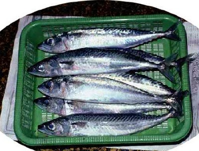 Cá Nục Long Hương  - dacsanthiennhien.net