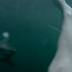 Cliff Jumper Nearly Lands On Great White Shark