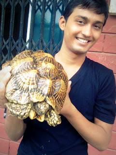 A Turtle's Attitude Rocks