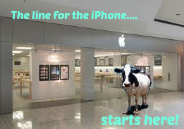 dairy cow iphone line