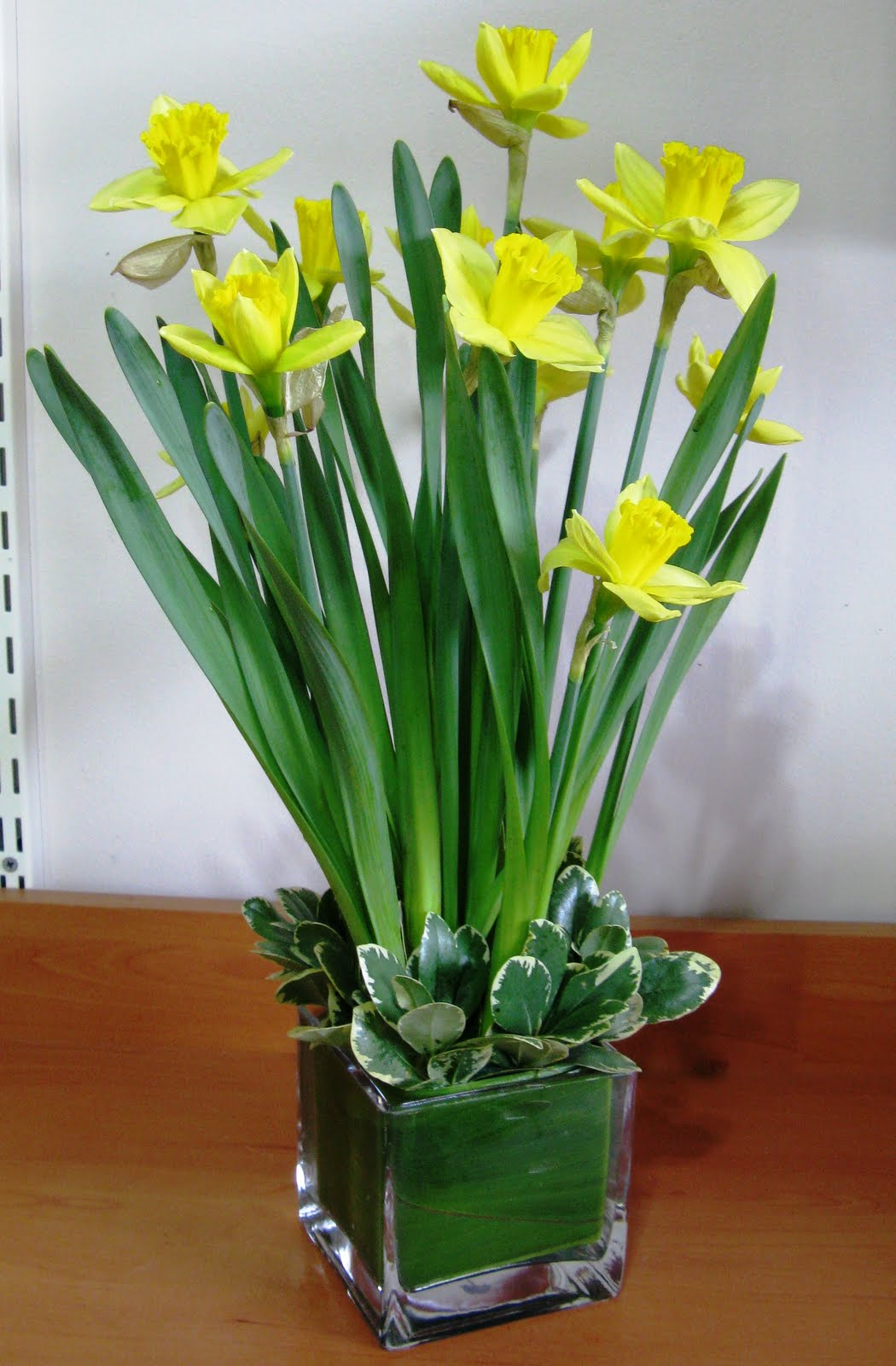 Dowds Flower Shop Birthday Flower By Month Daffodil And Jonquil