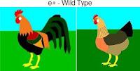 e-wildtype.jpg