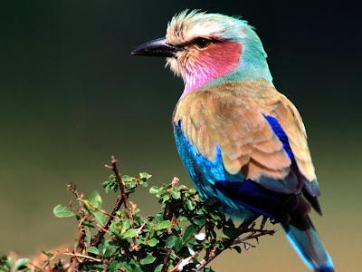 Free Desktop Wallpaper of Bird