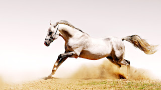 White Horse Runningh in Dust HD Wallpaper