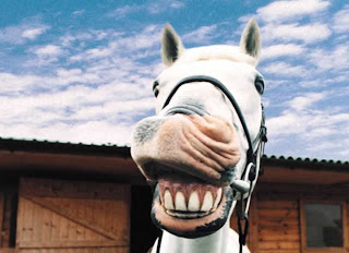 funny horse picture