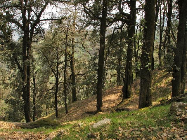 Oak forest - Day 3