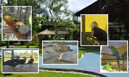 5 Wahana Wisata Terfavorit di The Jungle Bogor