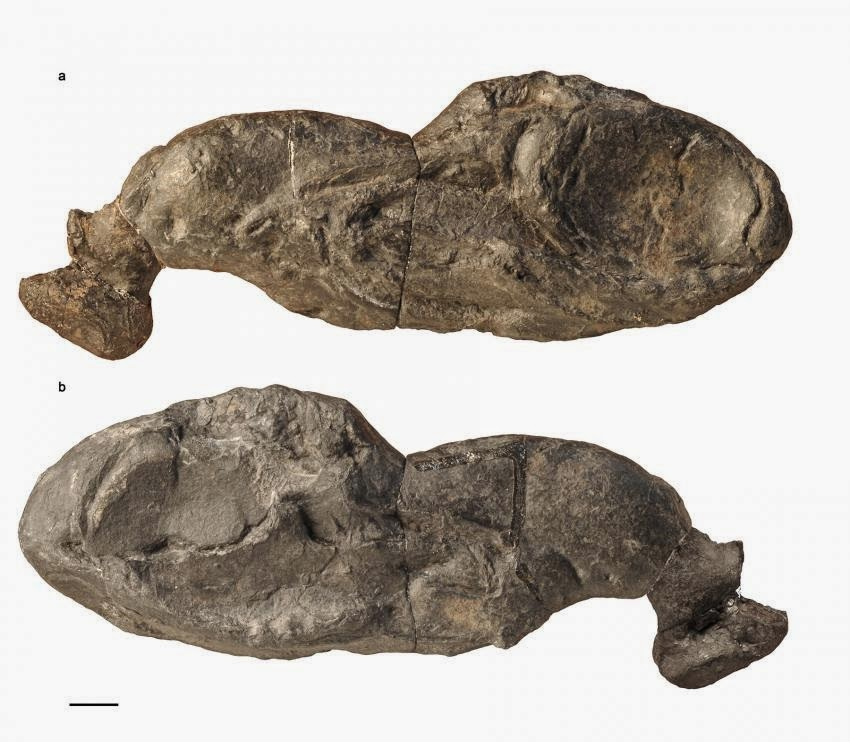 Ancient shark fossil reveals new insights into jaw evolution