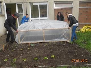 colocando o invernadoiro na horta