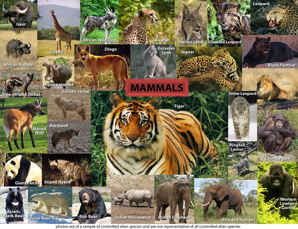 Dunia Hewan Pengertian Ciri Ciri Dan Habitat Mamalia Serta Contohnya