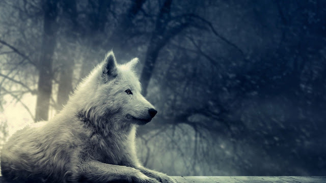 White Wolf In The Fog Forest