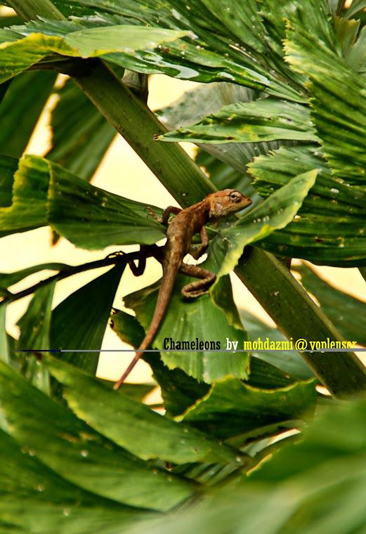 Rain Forest Nature Lensor
