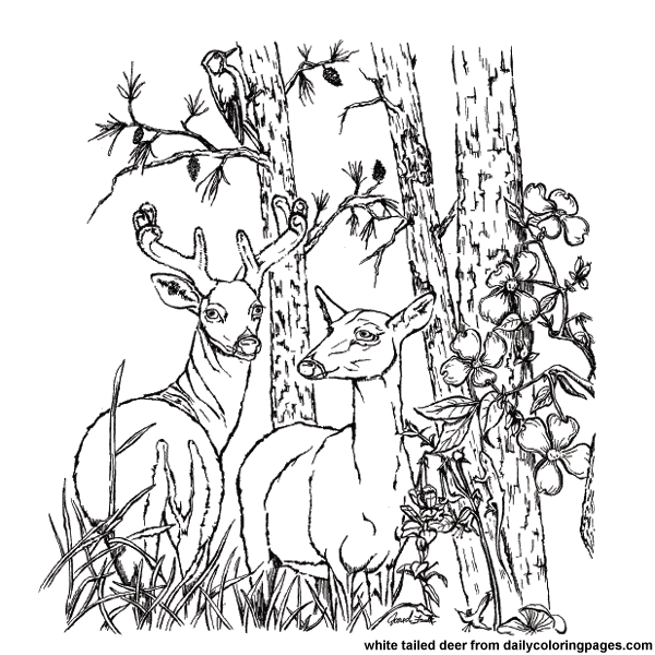Free Coloring Pages Of Deer With Antlers Free Deer Coloring Pages