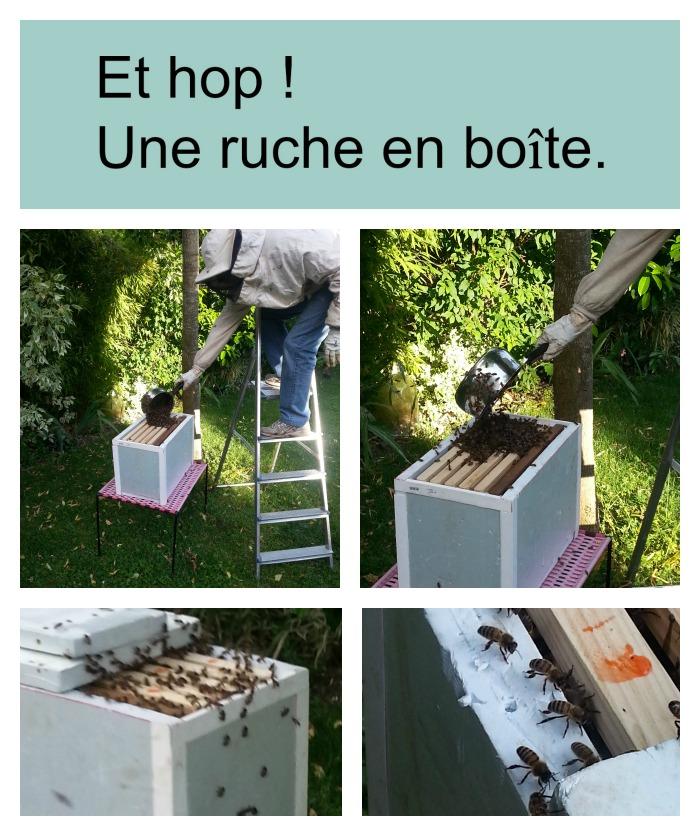 paris l 39 ouest sos essaim d 39 abeille dans mon jardin. Black Bedroom Furniture Sets. Home Design Ideas