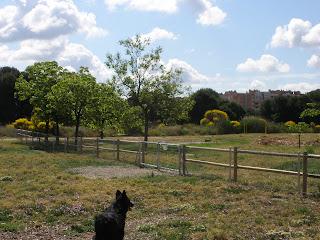 Zona canina Parque de los Cineastas Zaragoza
