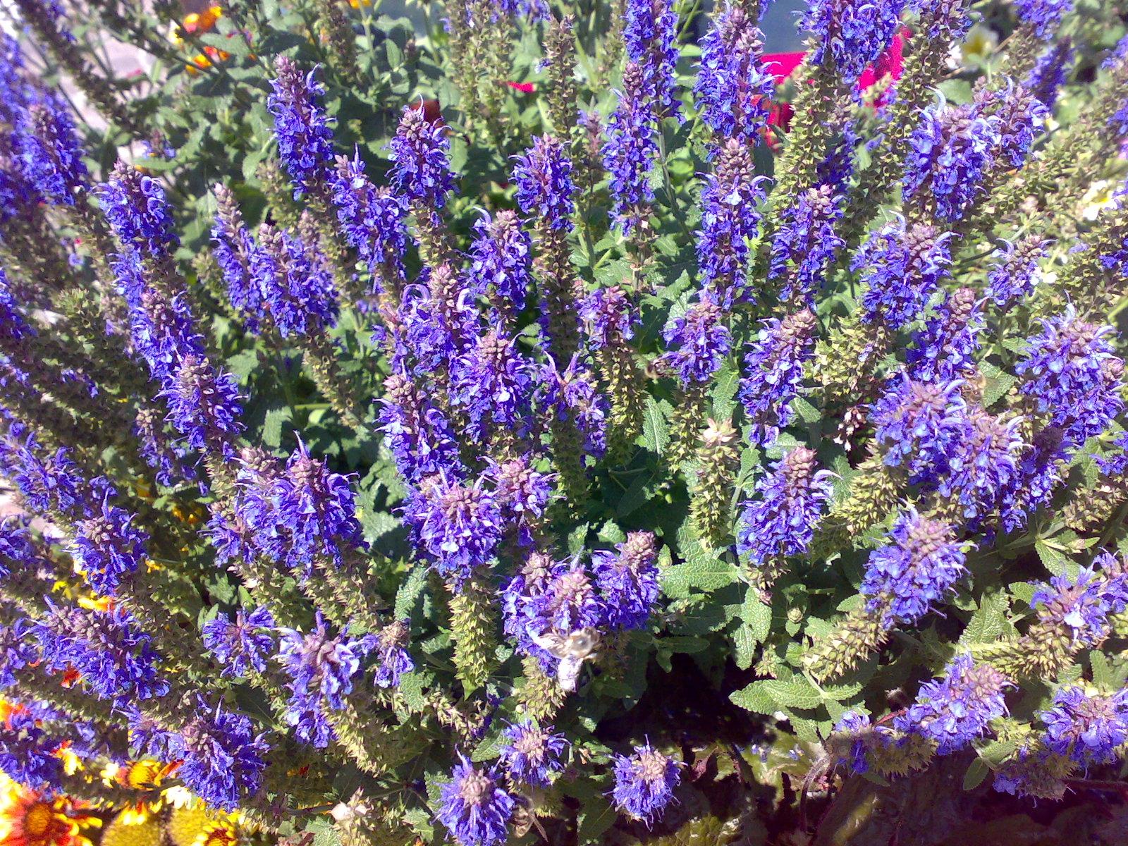 energia dei colori: fiori di montagna