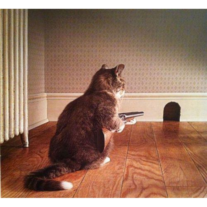 Кот боялся мышей