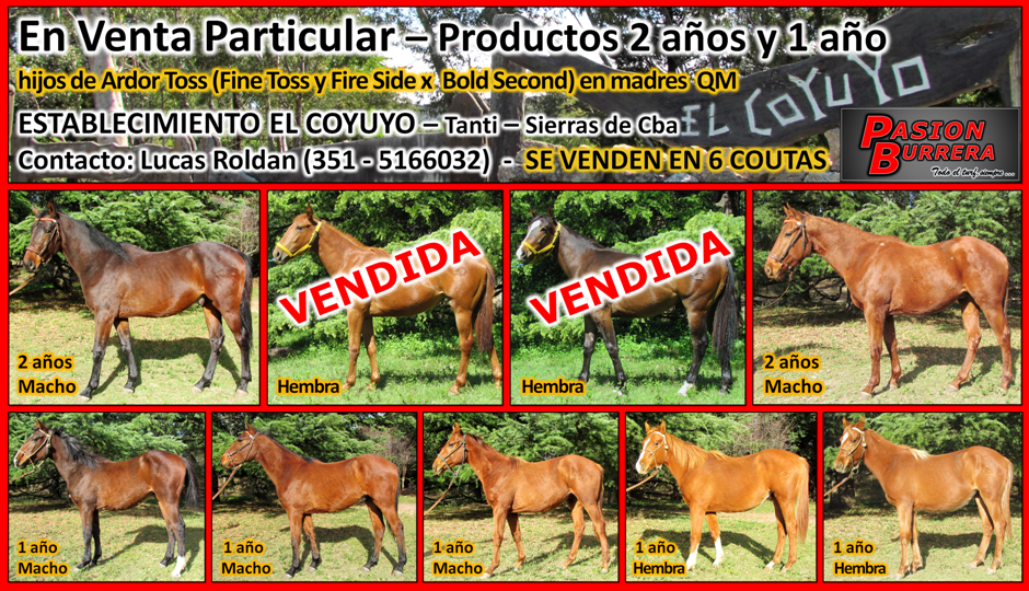 EL COYUYO - POTRILLOS EN VENTA