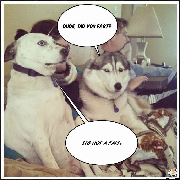 30 Funny animal captions - part 21 (30 pics), captioned animal pictures, dog fart