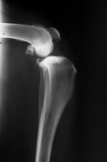 radiografía de rodilla en perro