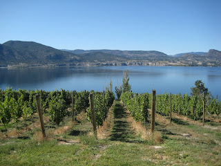 Viewfrom a Vineyard on the Naramata Bench