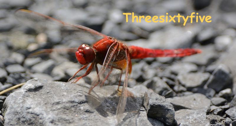 Threesixtyfive