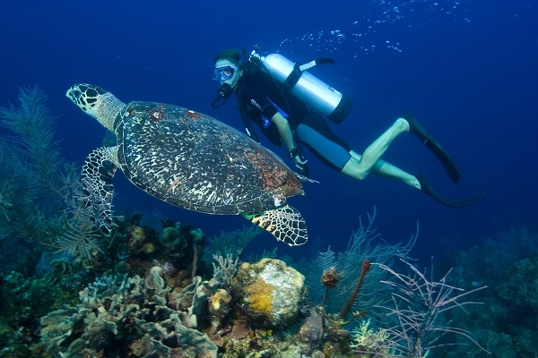 Snorkling dan Diving Alas Purwo