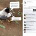 Facebook Dunia Kucing