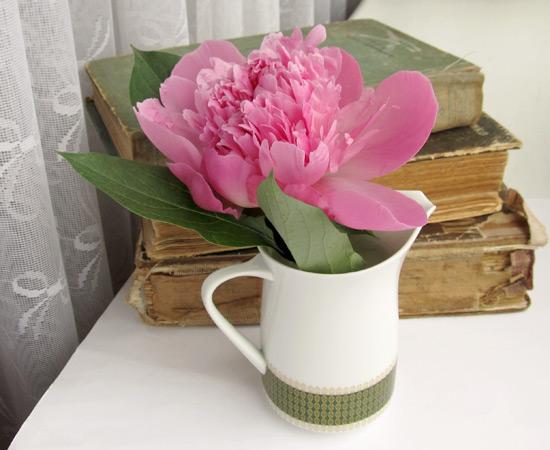 Peony pink, розовый пион