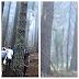 Makhluk Asing Tinggi Berwarna Kelabu Dikesan Dalam Sebuah Hutan Di Bulgaria
