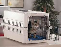 gato en jaula para viajar