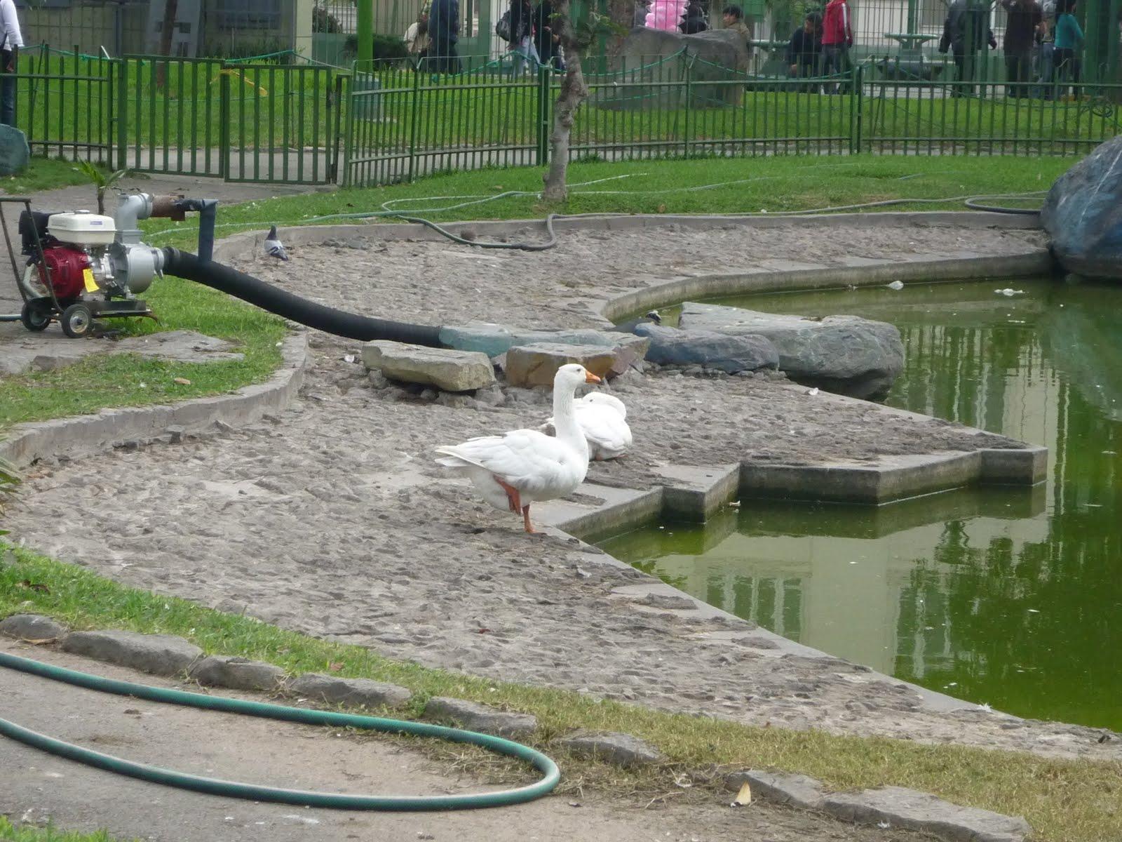 Parque de la exposici n lugares tur sticos regi n lima for Plastico para impermeabilizar lagunas