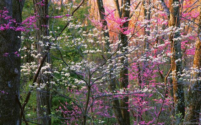 hình nền thiên nhiên hoa nở