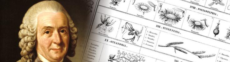 Resultado de imagen de Linneo y la biología